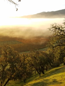 California Dreamin - Great lodging, Wine Country and San Francisco
