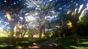 The entrance to the Marriott Kauai Resort through tons of trees